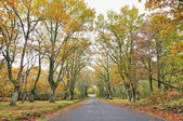 Galicia autumn forest  on road — Stock Photo