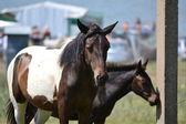 Atlar — Stok fotoğraf