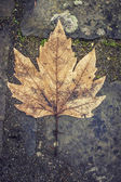 Grungy and rough leaf on asphalt — Stock Photo