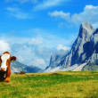 Stock Photo: Cow and Dolomites, Trentino-Alto Adige, Italy