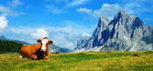 A cow and the Dolomites, Trentino-Alto Adige, Italy — Stock Photo