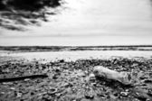 Desolation of winter sea — Stock Photo