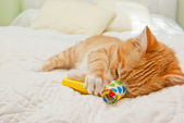 Ginger kitten sleeping — Stock Photo