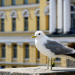 Seagull — Stock Photo #38574855