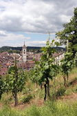 Schaffhausen vineyard — Stock Photo