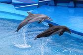 Delfíny skákání z vody — Stock fotografie