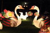 Swan lanterns for moon festival — Stock Photo