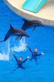 Dolphin performance, Hong Kong Ocean Park — 图库照片