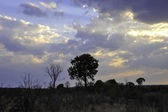 Hwange National Park — Stock Photo