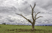 Death Tree — Stock Photo