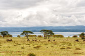 Naivasha lake — Foto Stock
