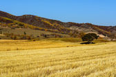 Wheat land — Stockfoto