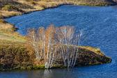 Birch treetop — Stock Photo