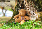 Loneliness Teddy Bear sitting in the garden. Concept about loneliness. — Stock Photo