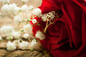 Ring and rose. — Stock Photo
