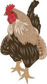Teaser vector brillante polla guapo — Vector de stock