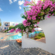 Bougainvillea flowering on a Greek villa — Stock Photo