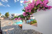 Bougainvillea flowering on a Greek villa — Stock fotografie