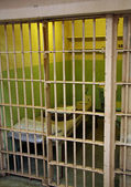 Alcatraz Cell — Foto Stock