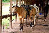 Cavalo no estábulo — Fotografia Stock