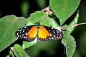 Colorful Butterfly — Foto Stock