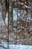 Winter Bird Feeder — Stock Photo