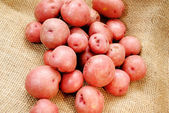Red Eyed Potatoes on Burlap — Stock Photo