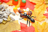 Fall Ant Looking for Food — Stock Photo