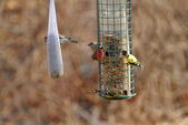 Busy Bird Feeder Eary in Spring — Stock Photo