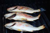 Three Fresh Whole Snapper Fish on a Grill — Stock Photo