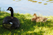 Mother and Baby Laying in the Shade Next to a Pond — Foto Stock