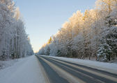 Winter forest road . — Stock Photo