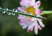 Fresh grass with dew drops — Stock Photo
