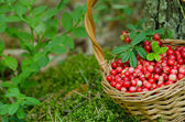 Fruits of forest (cowberries) in basket — Stock Photo
