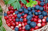 Fruits of forest (blueberries abd cowberries) in basket — Stock Photo