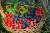 Fruits of forest (blueberries and cowberries) in basket — Stock Photo