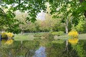 Pond in Lazienki Park in Warsaw — Stock Photo