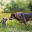 Dog and cat sniffing each other — Stock Photo
