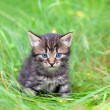 Little kitten sitting on the grass — Stock Photo