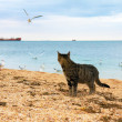 Stock Photo: Cat watching seagulls on the beach