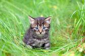 Little kitten sitting on the grass — Foto de Stock