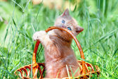 Cute kitten playing in the basket — Stock Photo