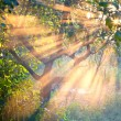 Sun rays in garden — Stock Photo #38988887