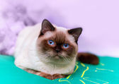 Cat lying on a green mat — Stockfoto