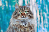 Portrait of cute cat sitting on forest background — Stockfoto