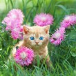Cute little kitten sitting in flower meadow — Stock Photo #39303389