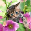 Foto de Stock  : Little kitten in the mallow
