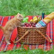 Little kitten sniffing the picnic basket — Stock Photo