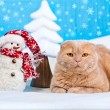 Cat lying near snowman — Stock Photo