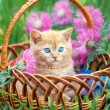 Cute little kitten sitting in a basket on the floral lawn — Stock Photo